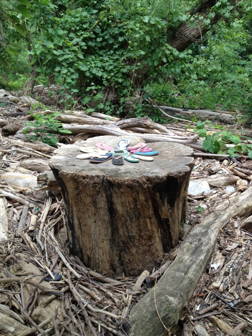 """Stump Flower"", Falls of the Ohio, June 2015"