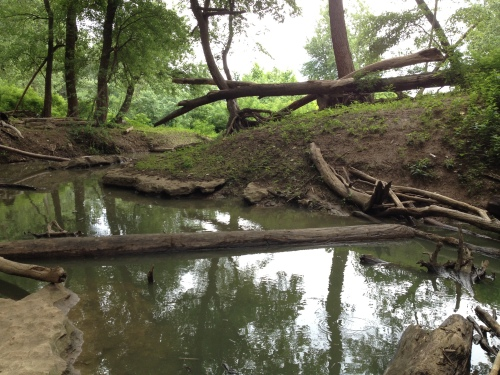 End of the Woodland Loop Trail, Falls of the Ohio, June 2015