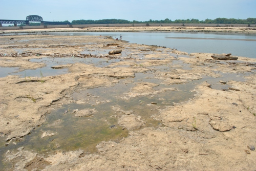 Exposed fossil beds at the Falls of the Ohio, mid August 2015
