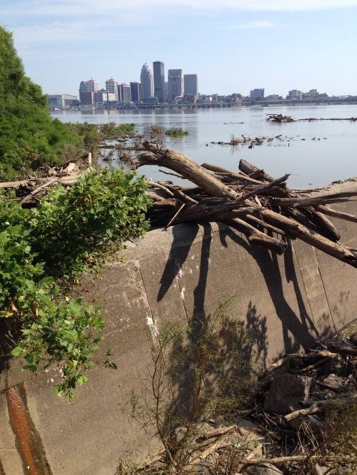 Stranded logs on the wier dam wall, with the City of Louisville in the background, late July 2015. Falls of the Ohio