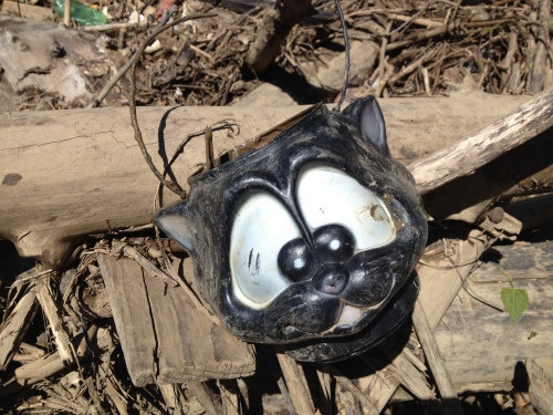 Plastic black cat head candy carrier, Falls of the Ohio, 2015