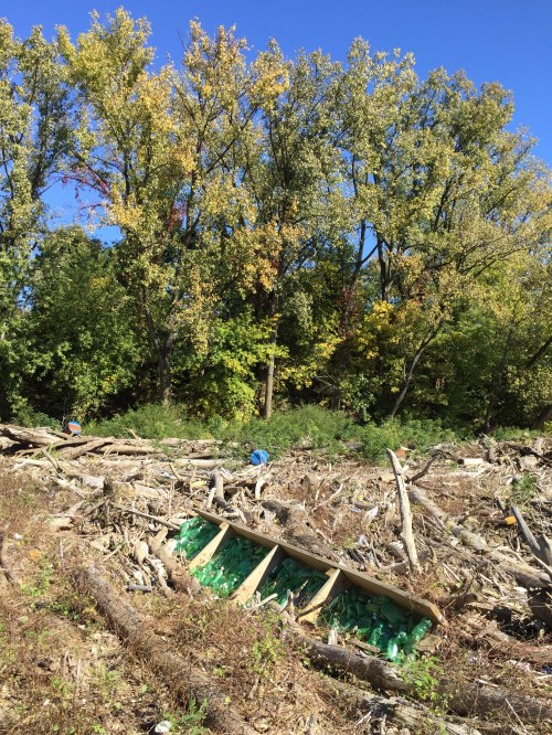 Green Bottles in Autumn, Falls of the Ohio, October 2015