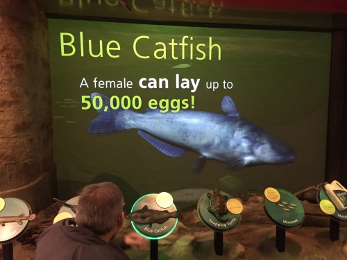 "Virtual aquarium image from the ""The Falls Today"", Falls of the Ohio Interpretive Center, Jan. 8, 2016"