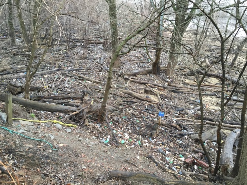 Detritus on the riverbank, Falls of the Ohio State Park, Jan. 8, 2016