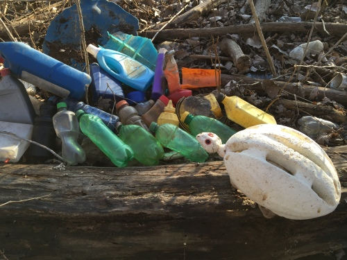 Red-eyed Tortoise with found plastic bottles, Falls of the Ohio, Feb. 7, 2016