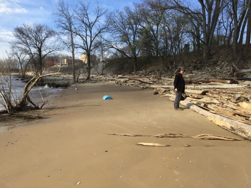 Chiel collecting driftwood, Falls of the Ohio, March 20, 2016