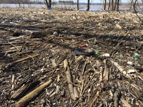 Wood debris in the water, Falls of the Ohio, Feb. 29, 2016