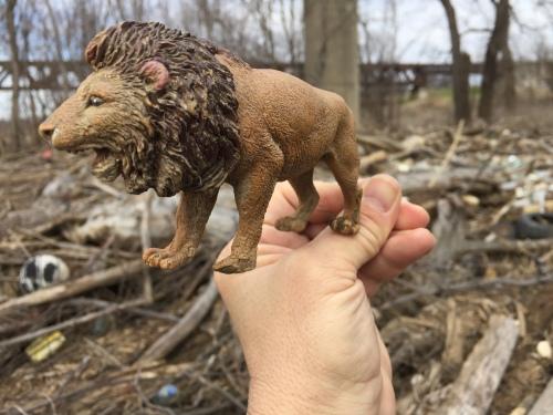 Found plastic toy lion, March 6, 2016