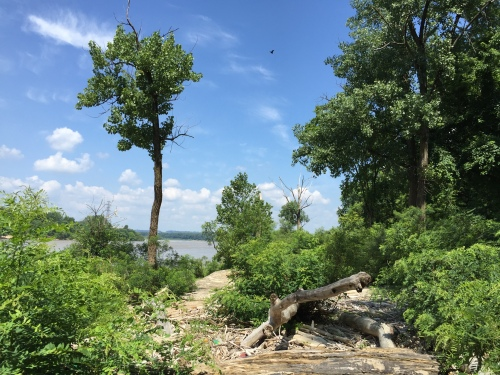 Landscape at the Falls of the Ohio, June 2016