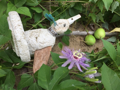Dodo of the Ohio and Passionflower, Falls of the Ohio, July 2016