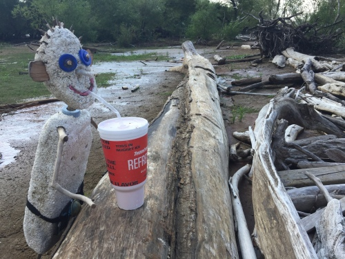 """Raccoon Eyes"" sipping from a found cup at the Falls of the Ohio, September 2017."