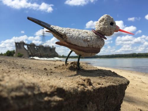 Black-tailed Tern